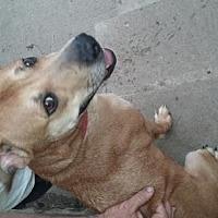 Adopt A Pet :: Buddy - Springfield, OH