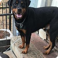 Adopt A Pet :: Bourbon - Mooresville, NC