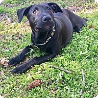 Adopt A Pet :: Poppy - Durham, NC