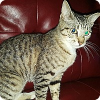Adopt A Pet :: Jellybean - Tampa, FL