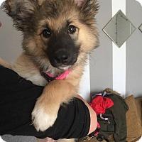 Adopt A Pet :: Meeka - Regina, SK