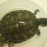 Adopt A Pet :: A1692614 - Los Angeles, CA