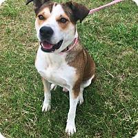 Adopt A Pet :: Edmonton - Houston, TX