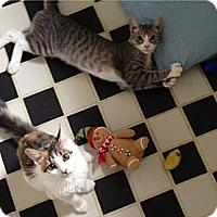 Adopt A Pet :: Diane and Tyson - New York, NY