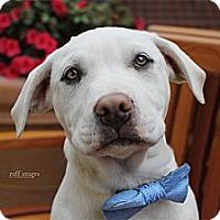 Adopt A Pet :: Jude - Costa Mesa, CA