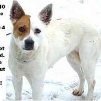 Adopt A Pet :: # 671-10 @ Animal Shelter - Zanesville, OH