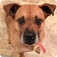 Adopt A Pet :: Ellis - Plainfield, CT