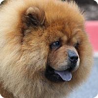 Adopt A Pet :: Trinity - Tucker, GA