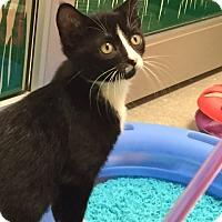 Adopt A Pet :: Chuck - Deerfield Beach, FL