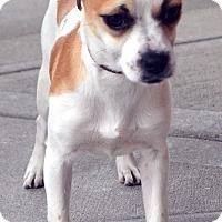 Adopt A Pet :: Nancy - Bridgeton, MO