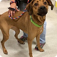 Adopt A Pet :: Halo in CT - Manchester, CT