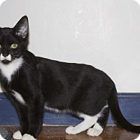 Adopt A Pet :: .Paprika - Ellicott City, MD