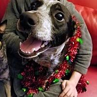Adopt A Pet :: Zeus 2-Adopted - Detroit, MI