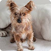 Adopt A Pet :: Chico - Santa Barbara, CA
