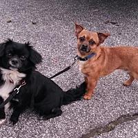 Adopt A Pet :: Peanutty - Loganville, GA