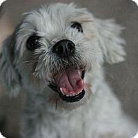Adopt A Pet :: Haddocks - Canoga Park, CA