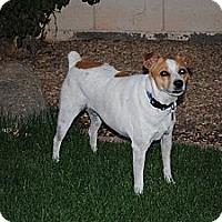 Adopt A Pet :: Ruby Tuesday - Phoenix, AZ
