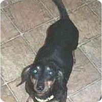 Adopt A Pet :: Thurman - Lawndale, NC