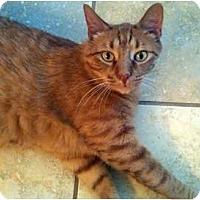 Adopt A Pet :: Sunkiss - Alexandria, VA