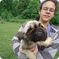 Adopt A Pet :: Chase - Albert Lea, MN