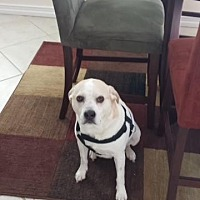 Adopt A Pet :: Rocky (Courtesy Post) - Spring Lake, NJ