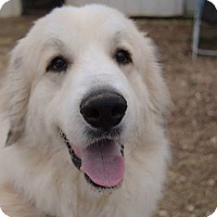 Adopt A Pet :: Jessie - Hamburg, PA