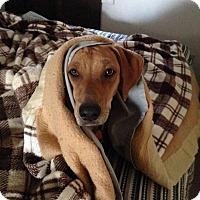 Adopt A Pet :: Hunny - Princeton, KY