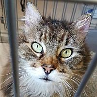 Adopt A Pet :: Maxine - Raritan, NJ