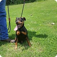Adopt A Pet :: Jacson - Arlington, TN