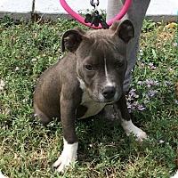 Adopt A Pet :: Rauzzy - Ogden, UT