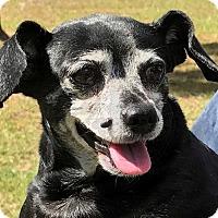 Adopt A Pet :: Janice - Orlando, FL