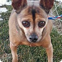 Adopt A Pet :: Loki - Ogden, UT