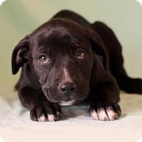 Adopt A Pet :: Eddy - Waldorf, MD