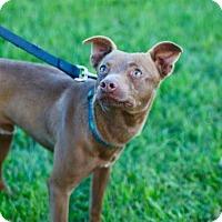Adopt A Pet :: ERNIE - Phoenix, AZ