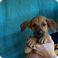 Adopt A Pet :: Ping - Oviedo, FL