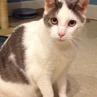 Adopt A Pet :: Edward - LaGrange, KY