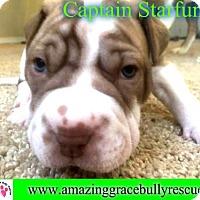 Adopt A Pet :: Captain Starfunkle - Pensacola, FL