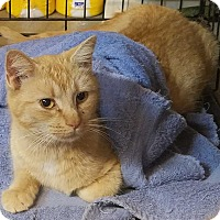 Adopt A Pet :: Katie - Acworth, GA