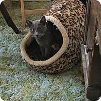 Adopt A Pet :: DUSTY - Brea, CA