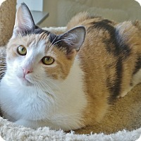 Adopt A Pet :: Tilly - Chambersburg, PA