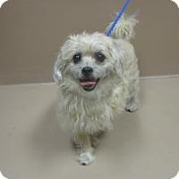 Adopt A Pet :: Loba - Reno, NV