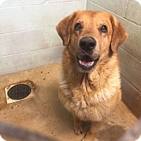 Adopt A Pet :: Orville - Sullivan, MO