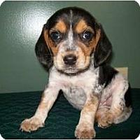 Adopt A Pet :: Nestle - Glastonbury, CT