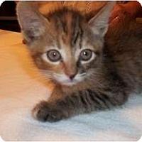 Adopt A Pet :: Mugsy - Acme, PA
