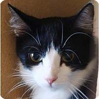 Adopt A Pet :: Lil - Albany, NY