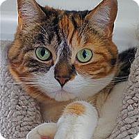 Adopt A Pet :: Faith - Victor, NY