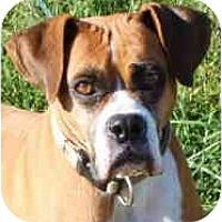 Adopt A Pet :: EvaPENDING - Toronto/Etobicoke/GTA, ON