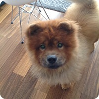 Adopt A Pet :: Cheddar aka Choo Choo - Tillsonburg, ON