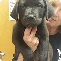Adopt A Pet :: Harrison - Groton, MA