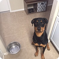 Adopt A Pet :: kia - Gilbert, AZ
